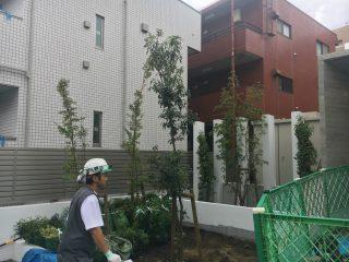 (仮称)TT-FLAT新築工事 植栽工事