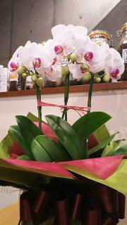 創立記念日のお祝いとして素敵なお花が届きました