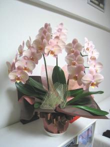 アトリエ開設5周年祝いの素敵なお花をいただきました。