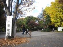 大宮公園の紅葉