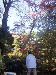 氷川神社の紅葉 第2弾